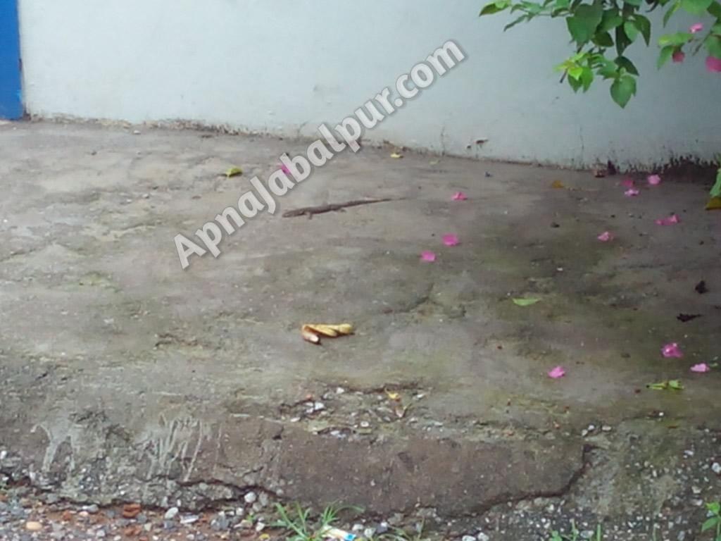 guheraindianmonitorlizard