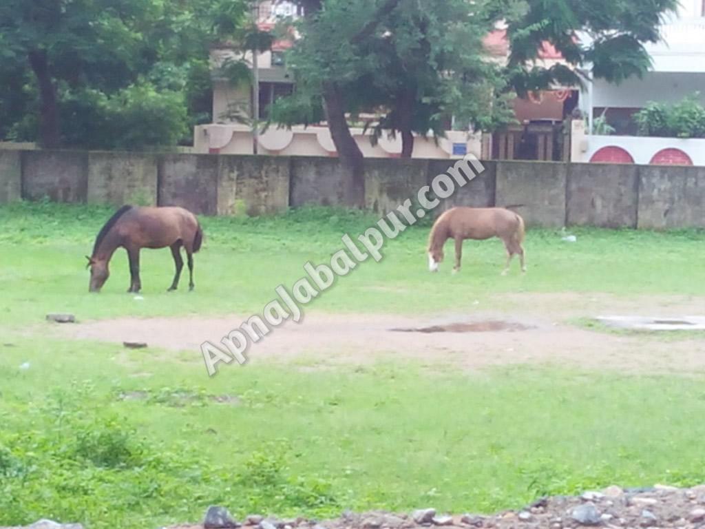 grazinghorses